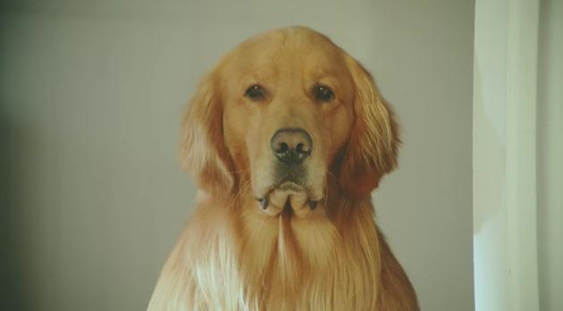 犬と子供に罪はないが…『amazonプライムのCMがマジうざい!しつこい!』やり過ぎ広告に問題視