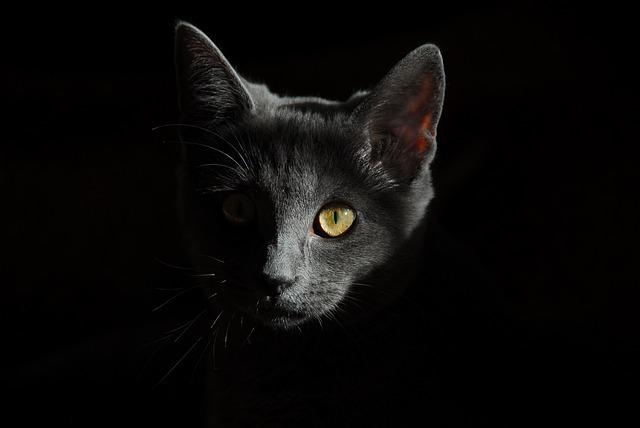 """【呪ってやる】猫を""""火あぶりの刑""""にした動画を投稿した大矢誠容疑者「税理士」の裏の顔がヤバすぎる…"""