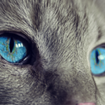 【猫100匹虐待】逮捕の新村健治容疑者、ハゲてるし老け顔過ぎて「50代には見えない…」